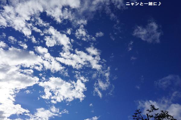 sora8511028.jpg