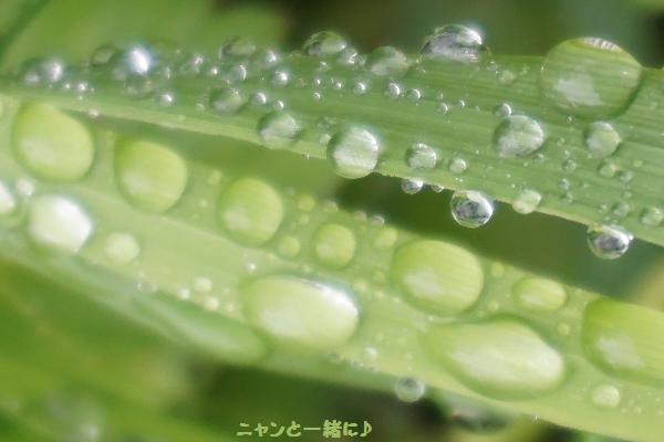 tamasizuku912.jpg
