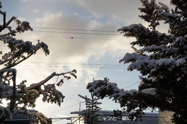 yukiki1201.jpg