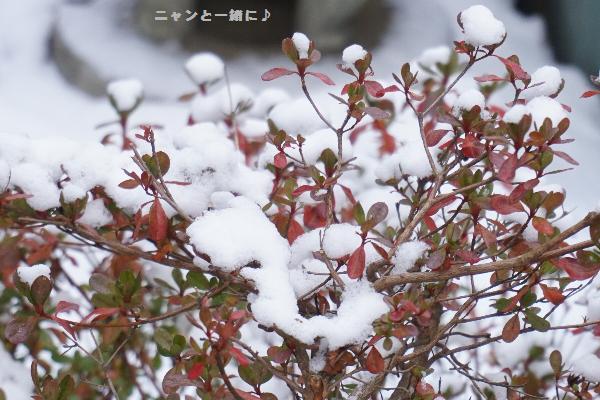 yukiki7481206.jpg