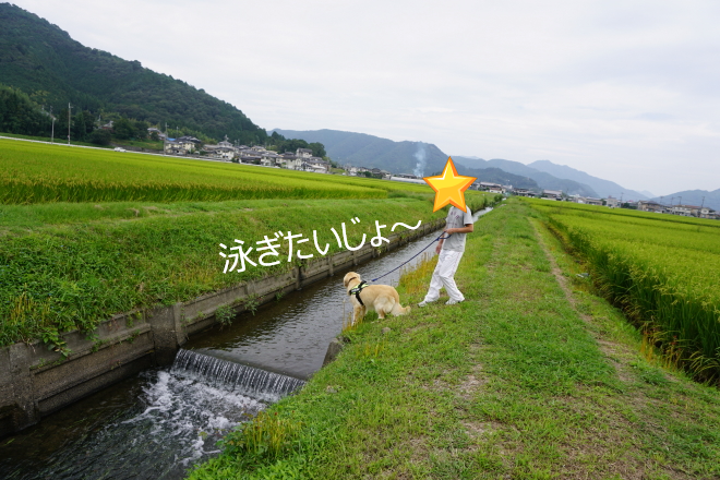 DSC07393.jpg