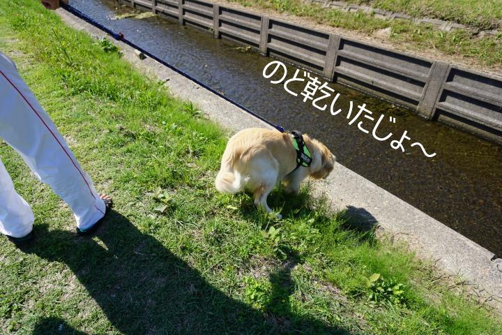 DSC07685.jpg