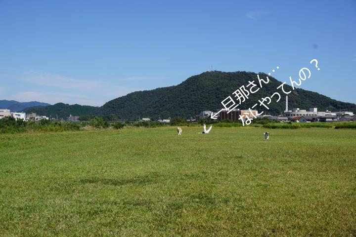 DSC07832.jpg