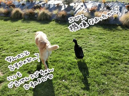 羊の国のラブラドール絵日記シニア!!「腹が減っては、エビスに成れぬ」写真1