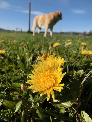 羊の国のラブラドール絵日記シニア!!「夏の準備」写真1