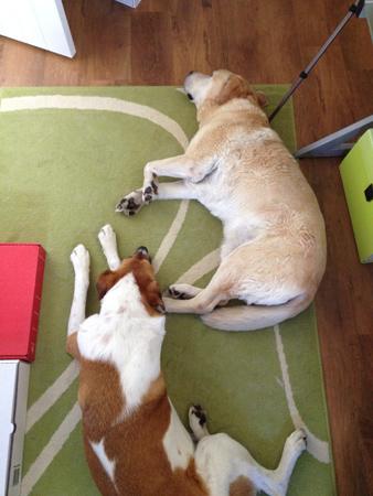羊の国のラブラドール絵日記シニア!!「犬たちのGraduation」4