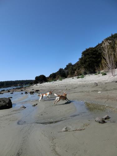羊の国のラブラドール絵日記シニア!!「ビーチは続くよ、どこまでも」写真6