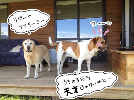 羊の国のラブラドール絵日記シニア!!「ドッグトレーニング開始」3