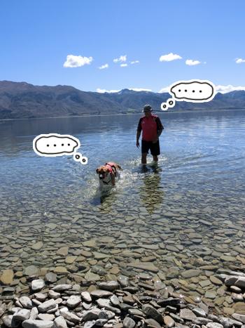 羊の国のラブラドール絵日記シニア!!「無言の水泳教室」6