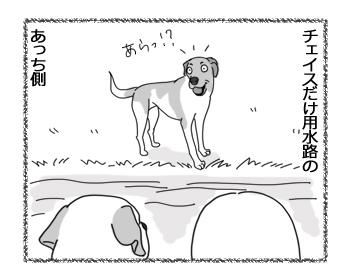 羊の国のラブラドール絵日記シニア!!「チェイスの挑戦」1
