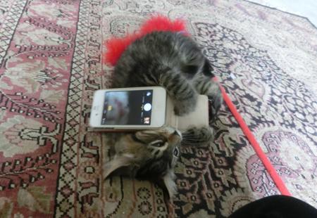 羊の国のラブラドール絵日記シニア!!「猫日記11月27日」6