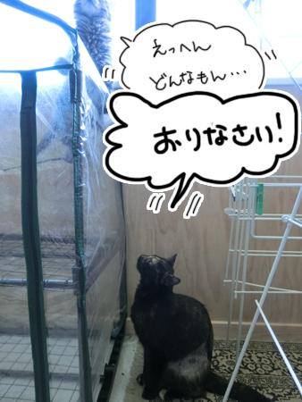 羊の国のラブラドール絵日記シニア!!「今日の猫日記ログ2」1