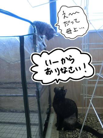 羊の国のラブラドール絵日記シニア!!「今日の猫日記ログ2」2