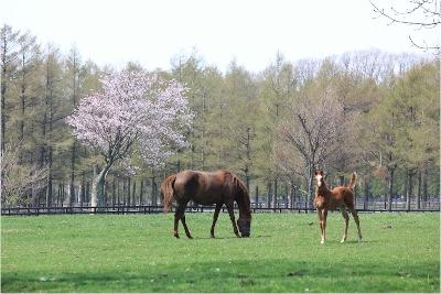 【競馬】トウショウ牧場が10月いっぱいで閉鎖に