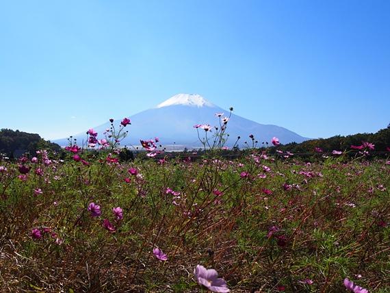 hananomiyako-20151012-14s.jpg