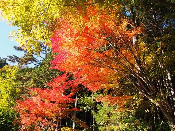 inagako-20151103-09s.jpg