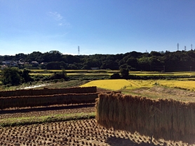 inugami-20150922-41s.jpg