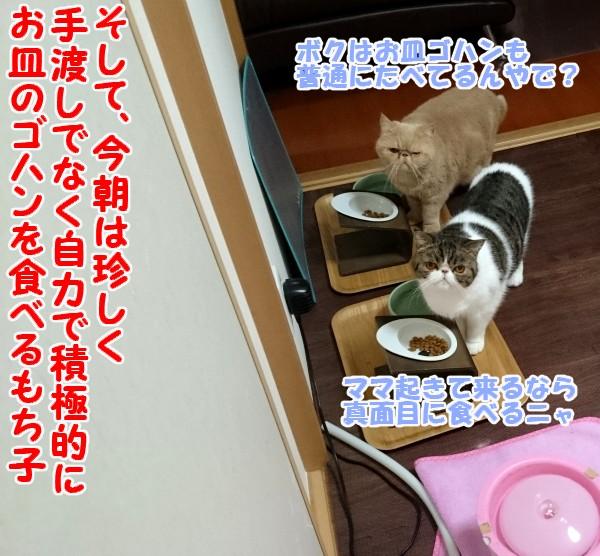 20151028213838c72.jpg
