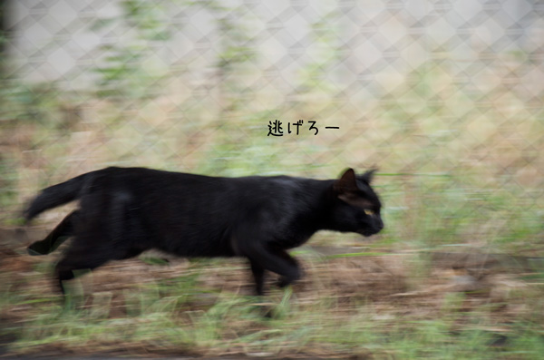 a_DSC3583.jpg
