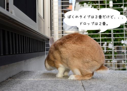 n_DSC5119.jpg