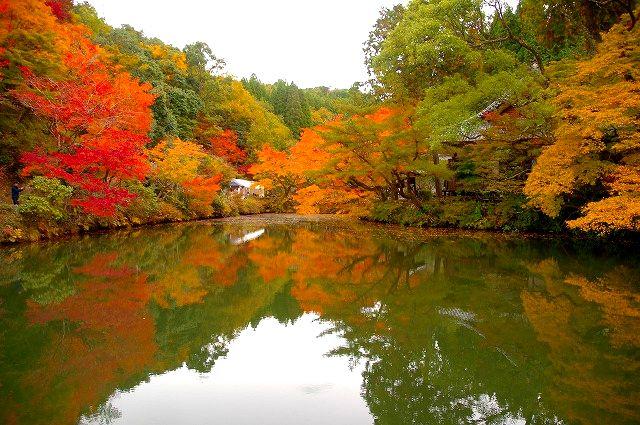 彩 宝生寺の秋(昼の部)