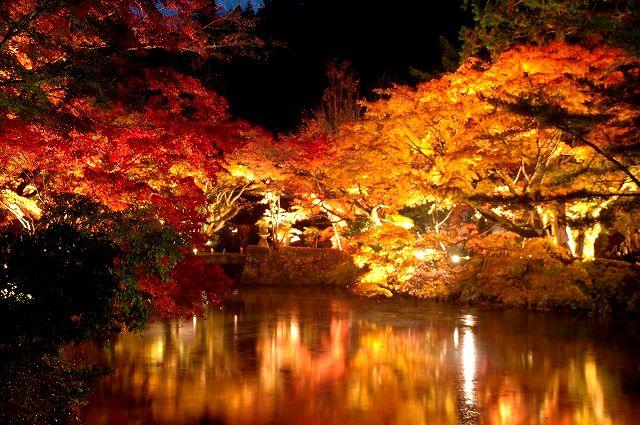 彩 宝生寺の秋(夜の部)
