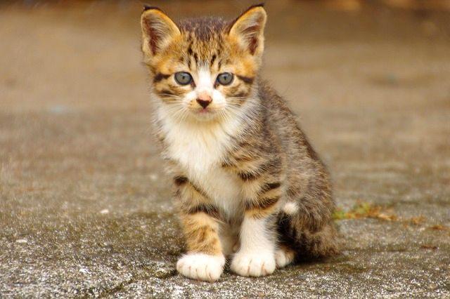 またきちゃったよ~猫の楽園 3