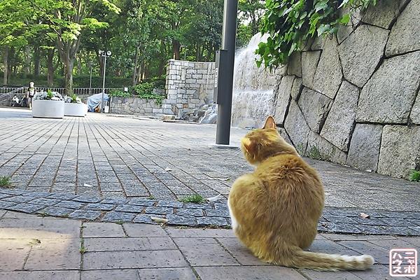 新宿中央公園の猫さん