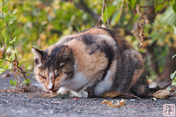 富山 野良猫(ニャポ旅13)