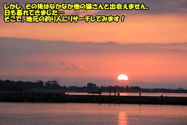 ニャポ旅13 富山猫 後編