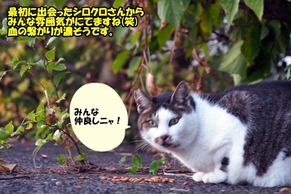 ニャポ旅13 富山 猫 後編