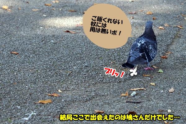 ニャポ旅13 富山編