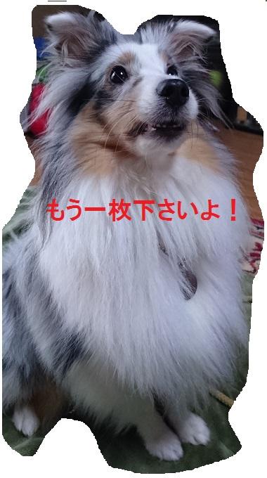 DSC_000003.jpg