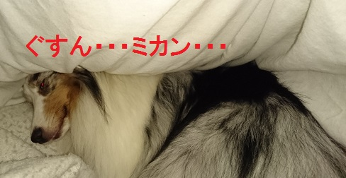 DSC_0545_20151205212054073.jpg