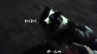 MOV_1262(3).jpg