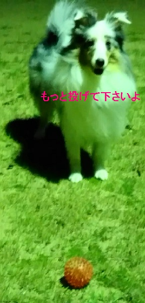 MOV_1317(6).jpg