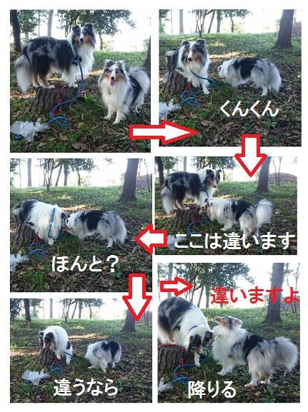 collage-1445153097629.jpg