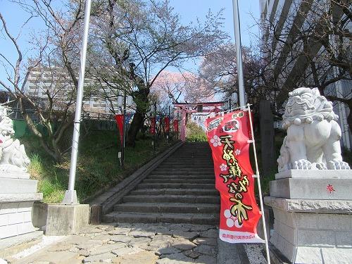 1604sakura2007.jpg