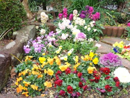 花壇のお花も賑やかになってきました