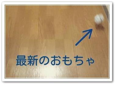 うちのブログの看板ニャンコ写真。その4♪北欧出身な猫種だけあって東京の寒さなんて全然寒くないのカモ?(- ▼ -;)
