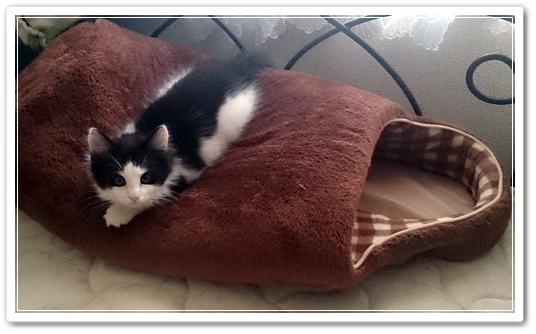 『ドーム型の猫ベッドを買ってくるとこうなる』が、そのとーりでウケた話♪うちのブログの看板ニャンコ写真。その7♪