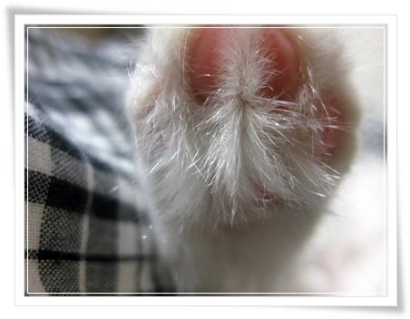 うちのブログの看板ニャンコ写真。その5♪この靴下だと、異常に攻撃されます(;・∀・)
