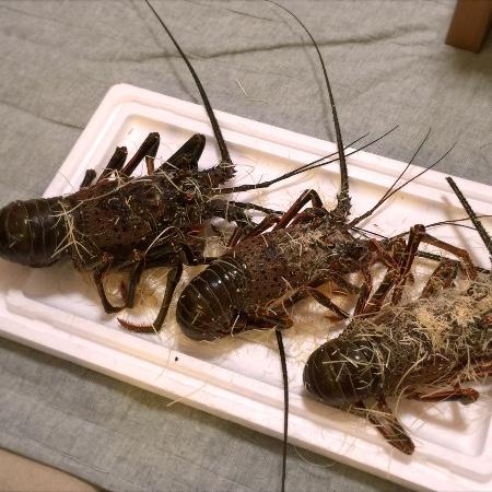 「伊勢海老」バリ美味っ! 高知県奈半利町にふるさと納税していただいたお礼の品が絶品だった件