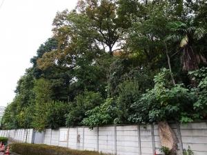 六郷用水跡の緑ある景観と安全を守る会