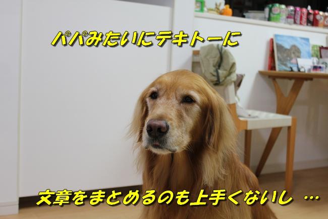 20151023224753b68.jpg