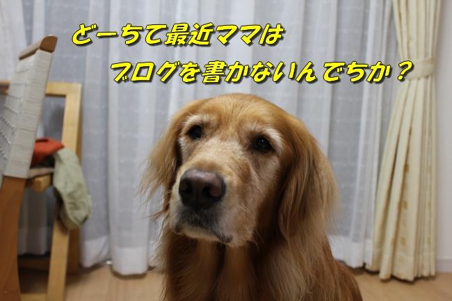 20151023224816cb2.jpg