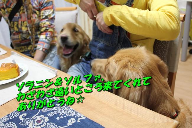 20151030224117e87.jpg