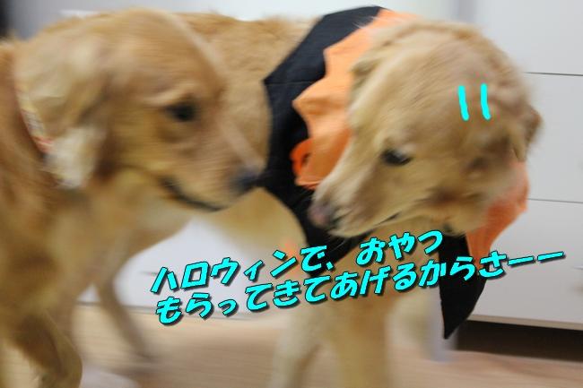 20151030224204e73.jpg