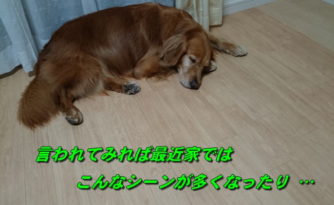 DSC_3299.jpg