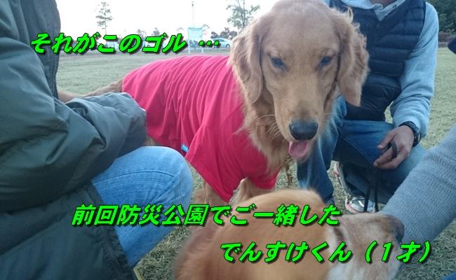DSC_4257_2015112521580790a.jpg